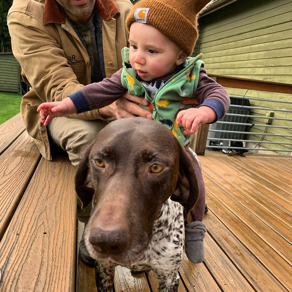 family friendly hunting dogs